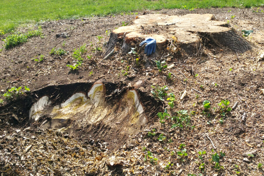 Stump Removal All Suburbs